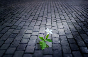 white flower growing on street floor tile old brick at night