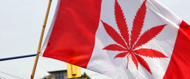 D722PF Canadian flag with Marajuana leaf print, Pro legalisation of Cannabis and Marijuana marching at Gay Pride, Vancouver British Columbia, Canada.